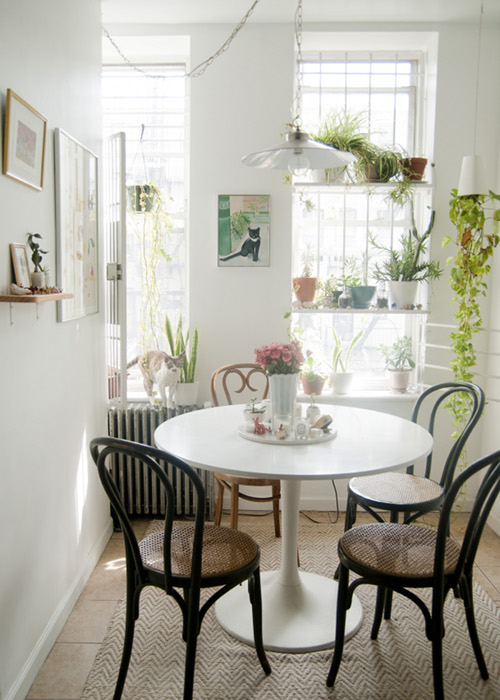 kitchen_indoor_plants_window_forgeyou
