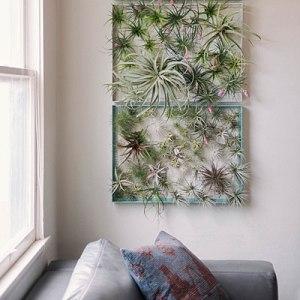 air-plant-wall-art-sun-0116-l